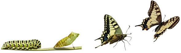 Chenille-Papillon